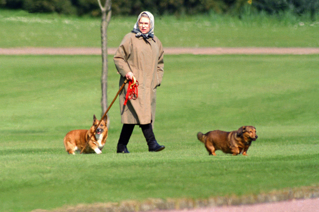 Queen Elizabeth Receives A New Corgi Puppy From Prince Andrew - SurgeZirc UK